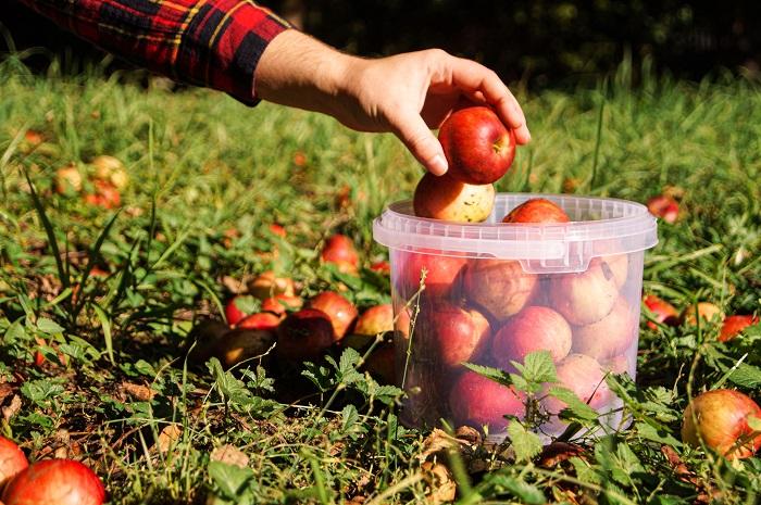 wiadro-plastikowe-transparentne-jablka-sad-ogrod